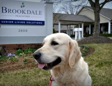 Dog Therapy Training NC | Dog Therapy Training by Camelot