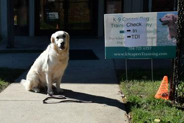Therapy Dog Training Concord Nc